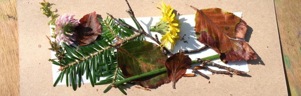 Foto af blade, grene og blomster