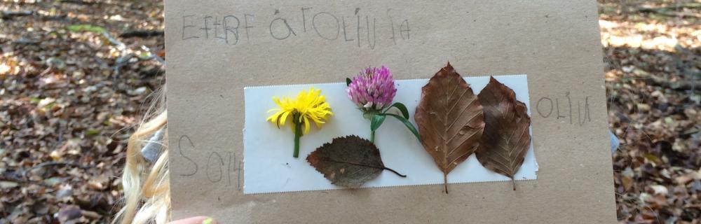 Collage med indsamlede planter og blade