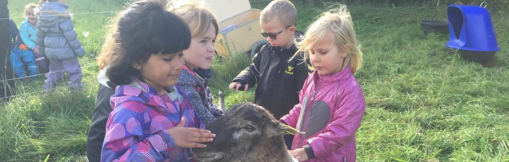 Børn føler på et får med hænderne