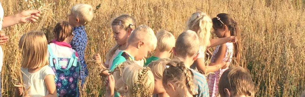 Børn i kornmark med naturvejleder