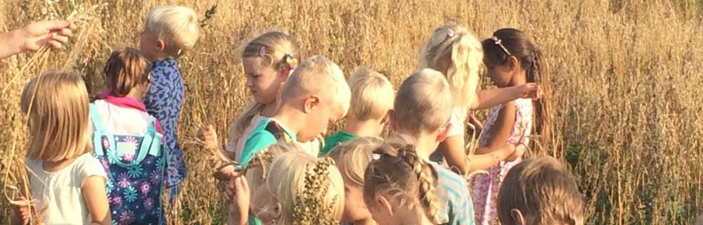 Elever i kornmark