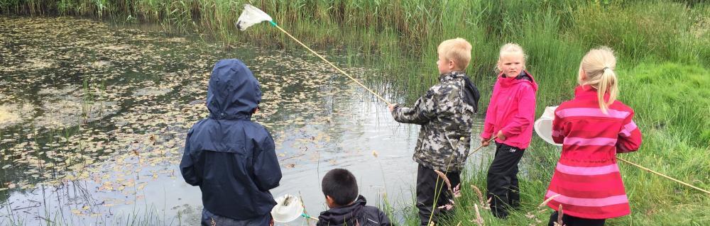 Børn fanger smådyr i en sø
