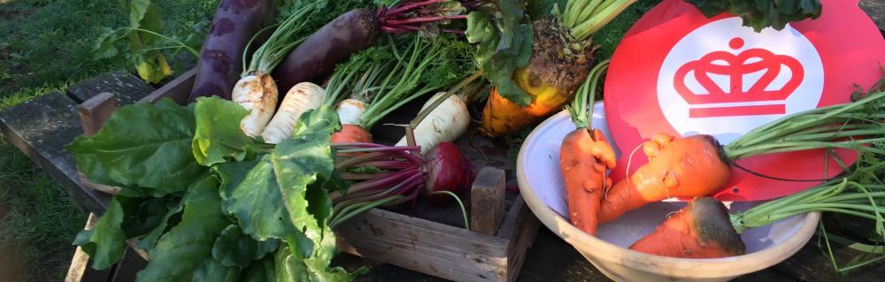 Økologimærke og friske øko-grøntsager