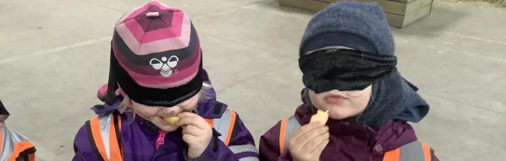 Børn med bind for øjnene smager på æbler