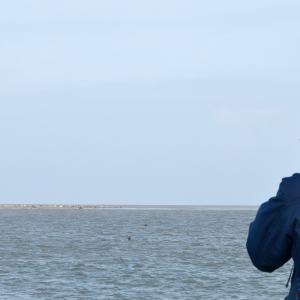 Sælerne i Vadehavet_Vadehavscentret