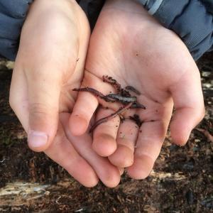 Krible Krable med naturvejleder
