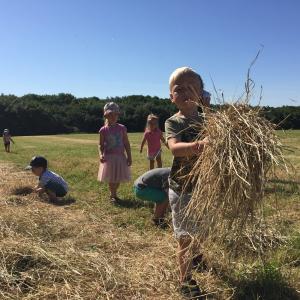 Høst og afgrøder dagtilbud