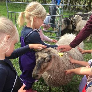 Børn mærker på fårets uld